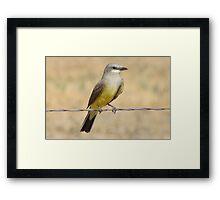 Western Kingbird  Framed Print