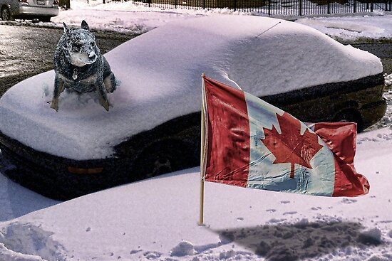 Oh Canada, We Stand on Cars and Freeze by GolemAura