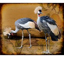 Pair Of Cranes And A Pear Photographic Print