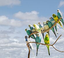 Parakeets perched on a branch againts a cloudy blue sky by Randall Nyhof