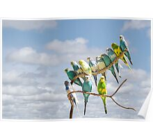Parakeets perched on a branch againts a cloudy blue sky Poster