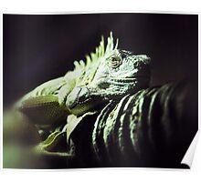 Dragon Watching Poster
