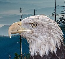 Bald Eagle in the Mountains by Randall Nyhof