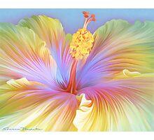 Hibiscus Flower Photographic Print