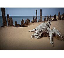 Tree Stump on the Beach at Kirk Park Photographic Print