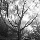 Ghost Tree by Tim Swinson