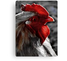 Red Rooster color select Canvas Print