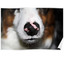 Zoozle Snout Poster