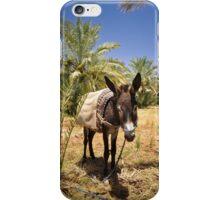 Severe Donkey Life iPhone Case/Skin