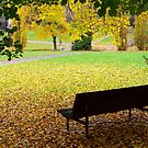 A Carpet of Fallen Leaves by Tim Coleman