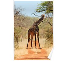 SORRY..., TAKE ANOTHER ROAD! - THE GIRAFFE – Giraffa Camelopardalis (KAMEELPERD) Poster