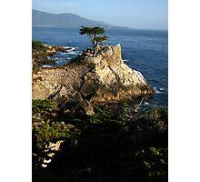 Lone Cypress, Pebble Beach, CA 2012 Photographic Print