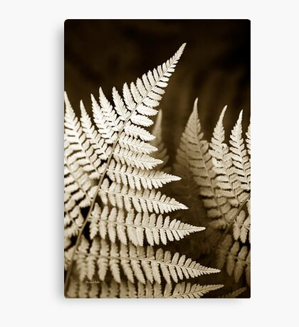 Monochrome Fern Canvas Print
