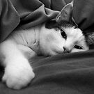Munchkin in Mama's bed! by heatherfriedman