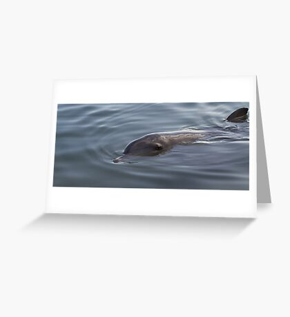Bottlenose Dolphin - Monkey Mia - WA Greeting Card