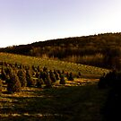 Pennsylvanian Woods by melanie1313