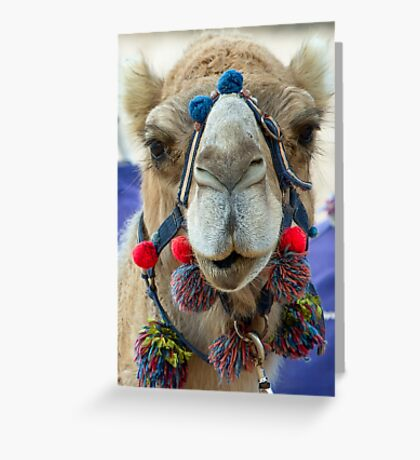 Camel - Monkey Mia - WA Greeting Card