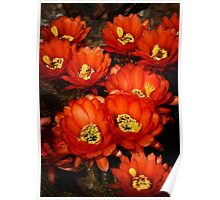 Red Torch Bouquet  Poster
