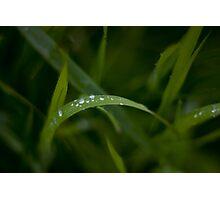 Rain drops on grass Photographic Print