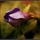 Macro Flower by AmyKippernes