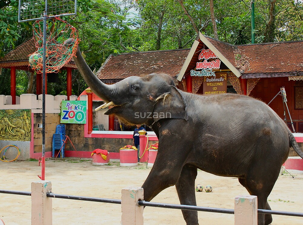 Elephants at Thailand Zoo by suzaan