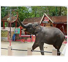 Elephants at Thailand Zoo Poster