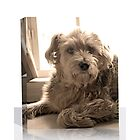 A Canvas Treat For Our Pets by SnappyCanvas