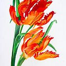 Parrot Tulips by taiche