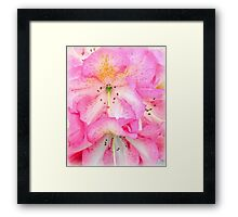 Rhodies... Framed Print