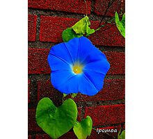 Heavenly Blue Photographic Print