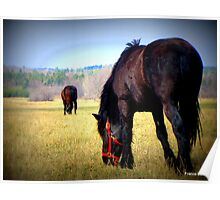 Horses at the Ranch Poster