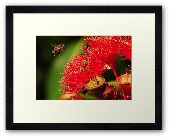 Bee in Flight by Heather Samsa