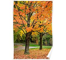 Colorful Autumn Trees Landscape Poster