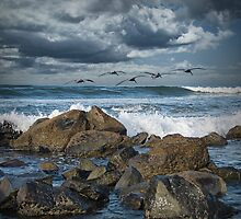 Pelicans over the surf on Coronado by Randall Nyhof