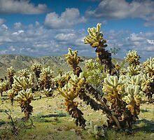 Cactus teddy bear cholla No.0265 by Randall Nyhof