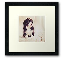Australian Shepherd Puppy Dog  Framed Print