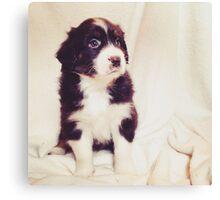 Australian Shepherd Puppy Dog  Canvas Print