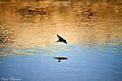 Swallow  by Pene Stevens