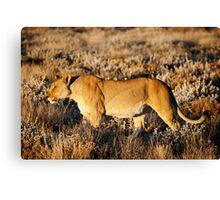 Lioness in profile Canvas Print