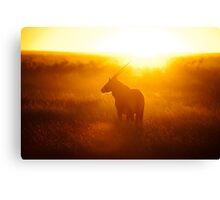Oryx at sunset Canvas Print