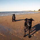 On the beach with Shela and Oscar by Michael Haslam