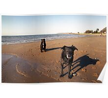 On the beach with Shela and Oscar Poster
