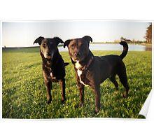 Shela and Oscar. Poster