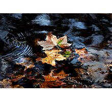 Autumn Leaves - Splash of Green Photographic Print