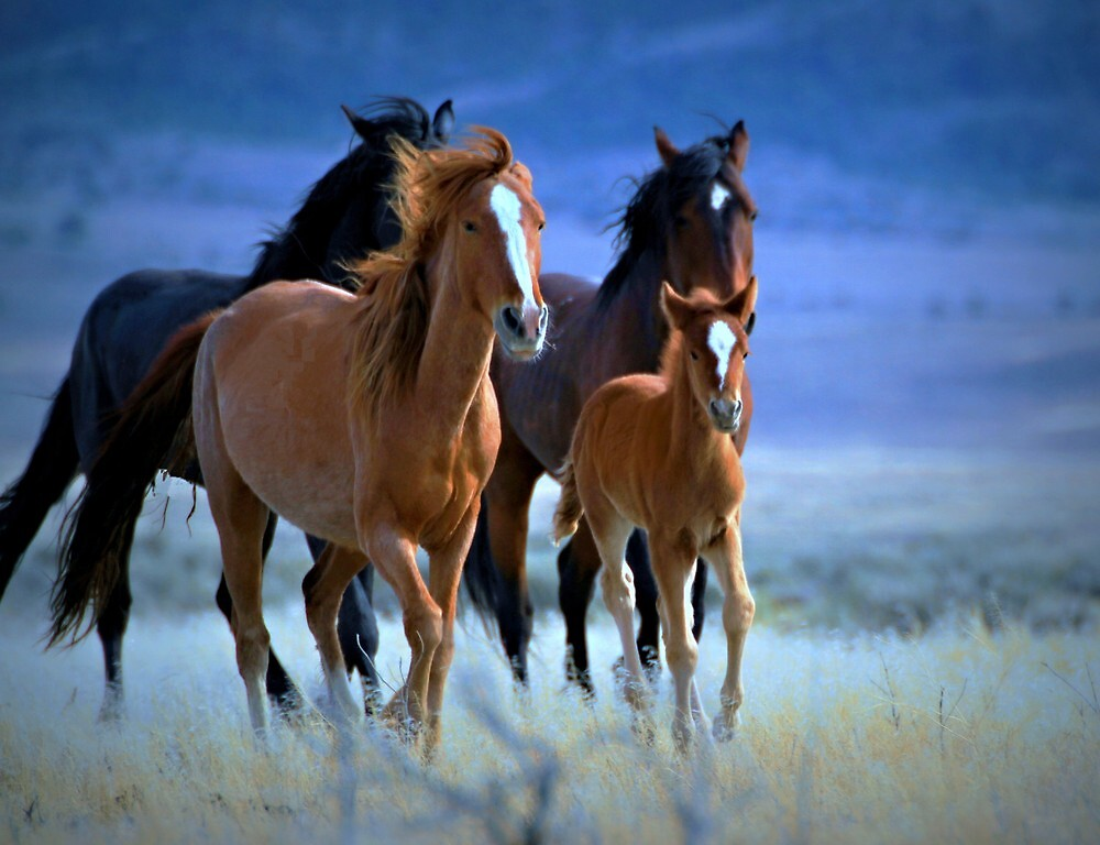 Running Wild~ Running Free by Jeanne  Nations