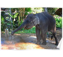 Water for Elephant Poster