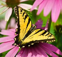 Swallowtail Butterfly Art by Christina Rollo