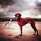 Erich & Lottie by elisabeth tainsh