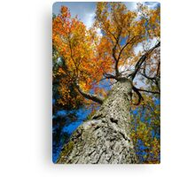 Fall Maple Tree Landscape Canvas Print