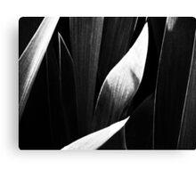 Untitled Monochrome Canvas Print